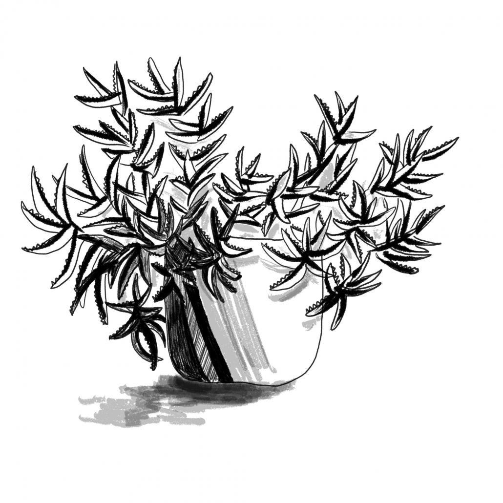 Lisbeth van Lintel procreate plant01